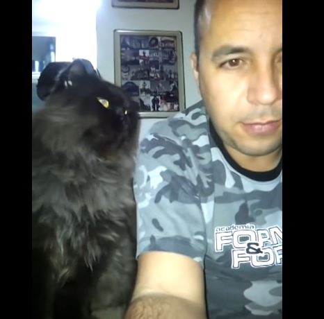A Cat That Doesn't Take No For An Answer Demands More Petting