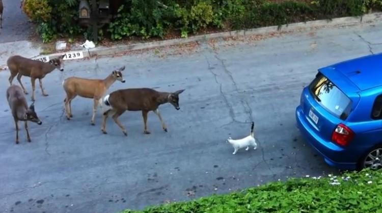 """Deer Meet A Very Strange Creature Called A """"Cat"""""""