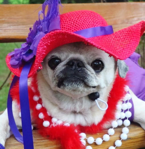 Here's A Daily Dose Of Cuteness For You: 8 Dogs Dressed As Fancy Ladies