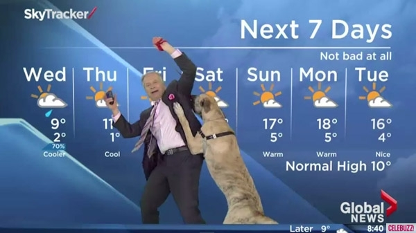 Weatherman Brings Dog Onto Live Television And The Dog's Reaction Is Hilarious!