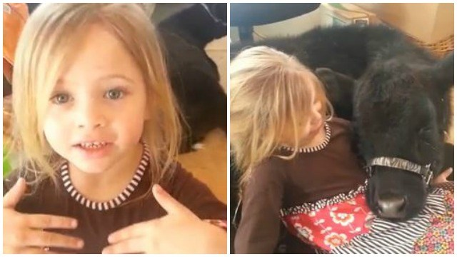 Why Did This 5-Year-Old Girl Let The Cow Into Her House? Listen To Her Adorable Explanation