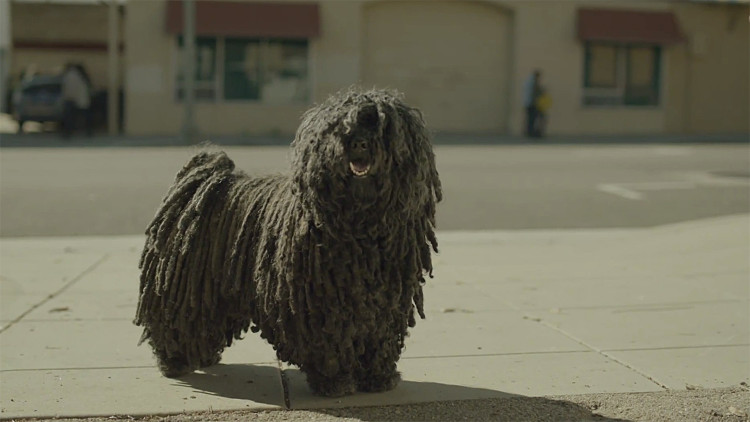 Dr. Pepper Just Released The Most Heartwarming Commercial And It Stars The World's Cutest Mop Dog