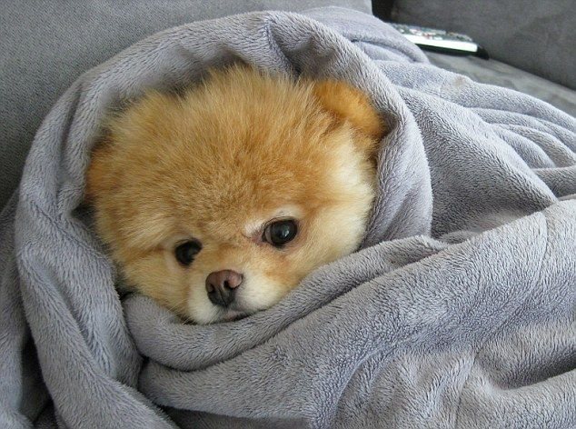 There Is Nothing More Adorable Than Super Cute Animals Wrapped In Super Cozy Blankets