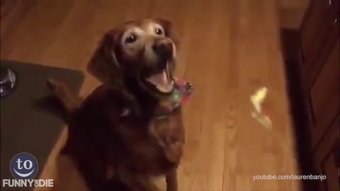 The Most Adorably Funny Dog Fetching Fails That You Will Ever See