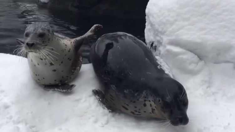 Portland Zoo Residents Enjoy Their First Snow Day!