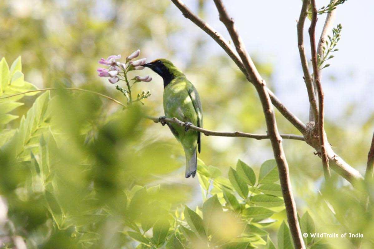 "Karimpuzha National Park (New Amarambalam Wildlife Sanctuary). WildTrails of India - ""One Stop Destination for all Indian Wildlife Enthusiasts"""