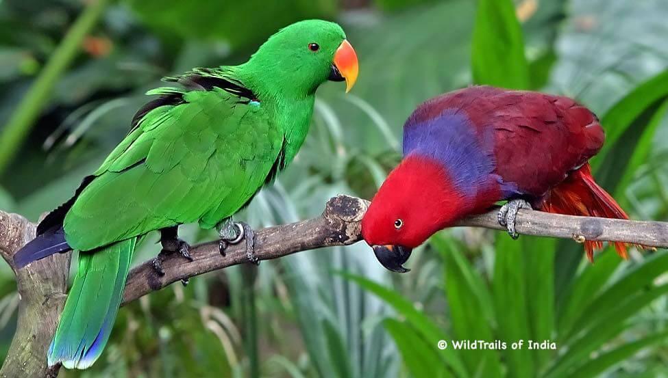 "Kumarakom Bird Sanctuary. WildTrails of India - ""One Stop Destination for all Indian Wildlife Enthusiasts"""