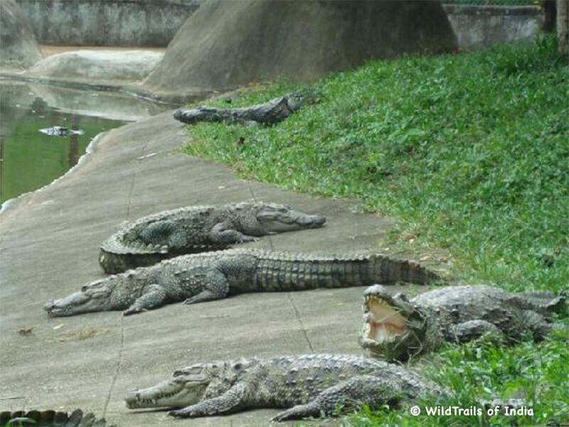 """Neyyar Wildlife Sanctuary. WildTrails of India - """"One Stop Destination for all Indian Wildlife Enthusiasts"""""""