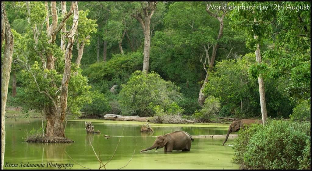 top 10 elephant reserves near bangalore