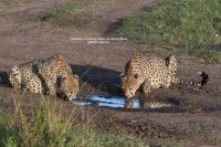 How to plan your Kenya Safari Trip