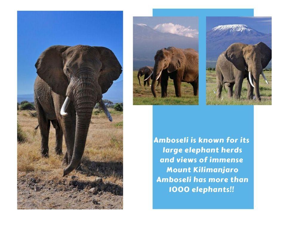 Amboseli (Wildtrails Recent Sightings)