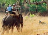Elephant safari at Jim Corbett