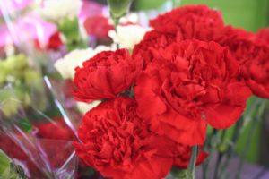 Carnations $1 per stem