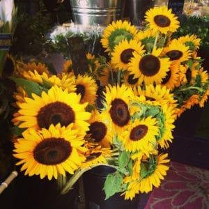 Local Sunflowers $2 per stem