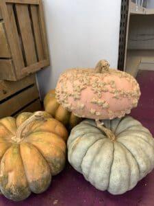 Fairytale Pumpkins $7