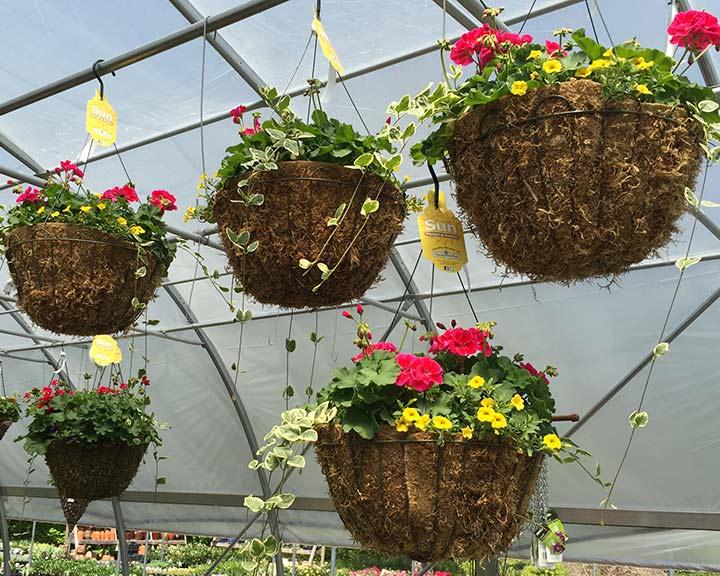 hanging-baskets-image-sandys-back-porch