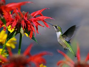 sandys-back-porch-hummingbird-image