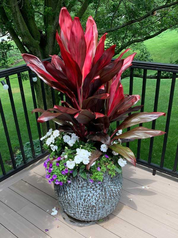 potted-floral-arrangement-photo-sandys-back-porch