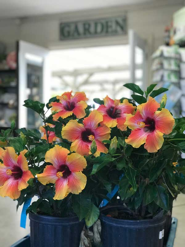 tropical-flowers-photo-sandys-back-porch