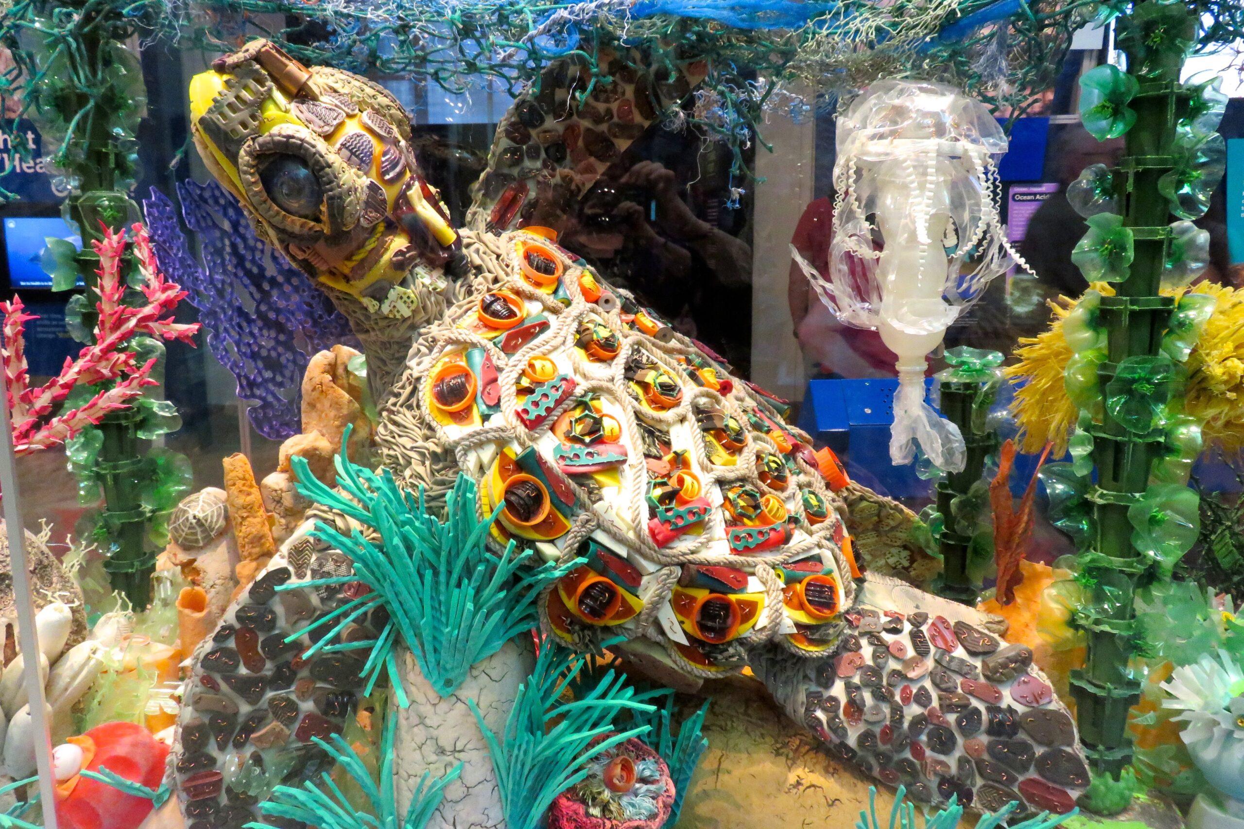 Turtle_Ocean2