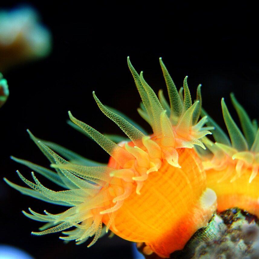 coral, reef, sea
