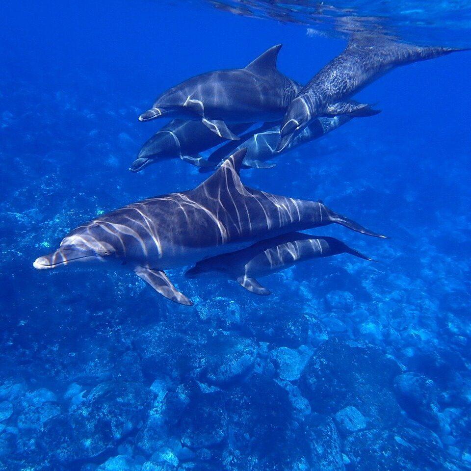 sea, dolphin, blue