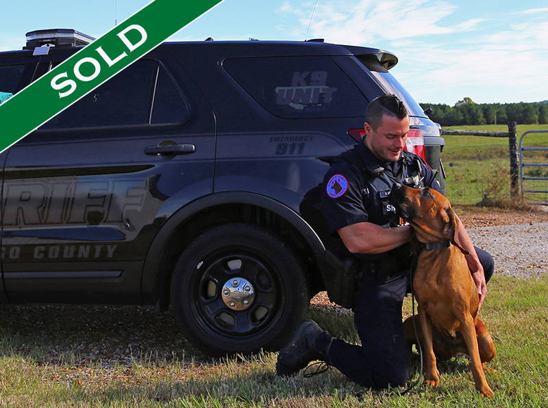 WCSO - Sadie - Trained K9's for sale -SOLD