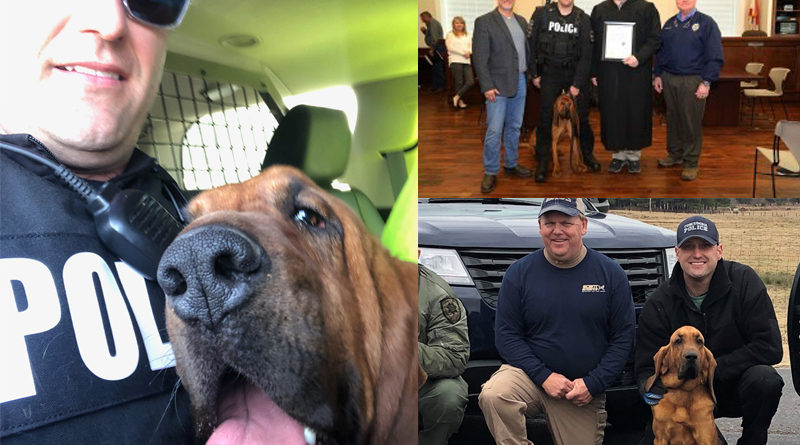 Bloodhound Eli New Tuscumbia PD Officer