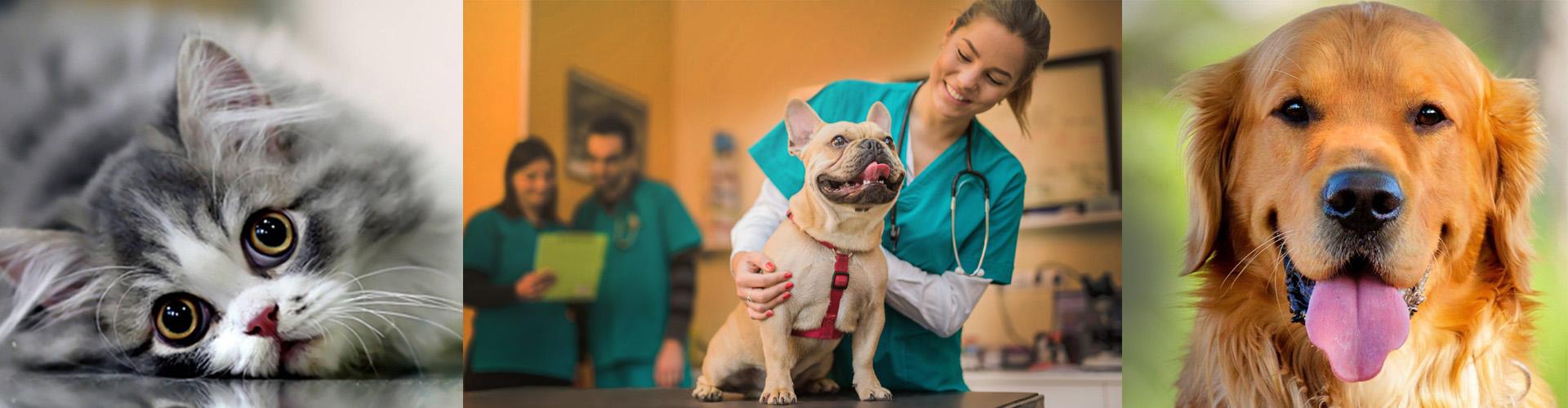 American Animal Cruelty Investigations School - AACIS