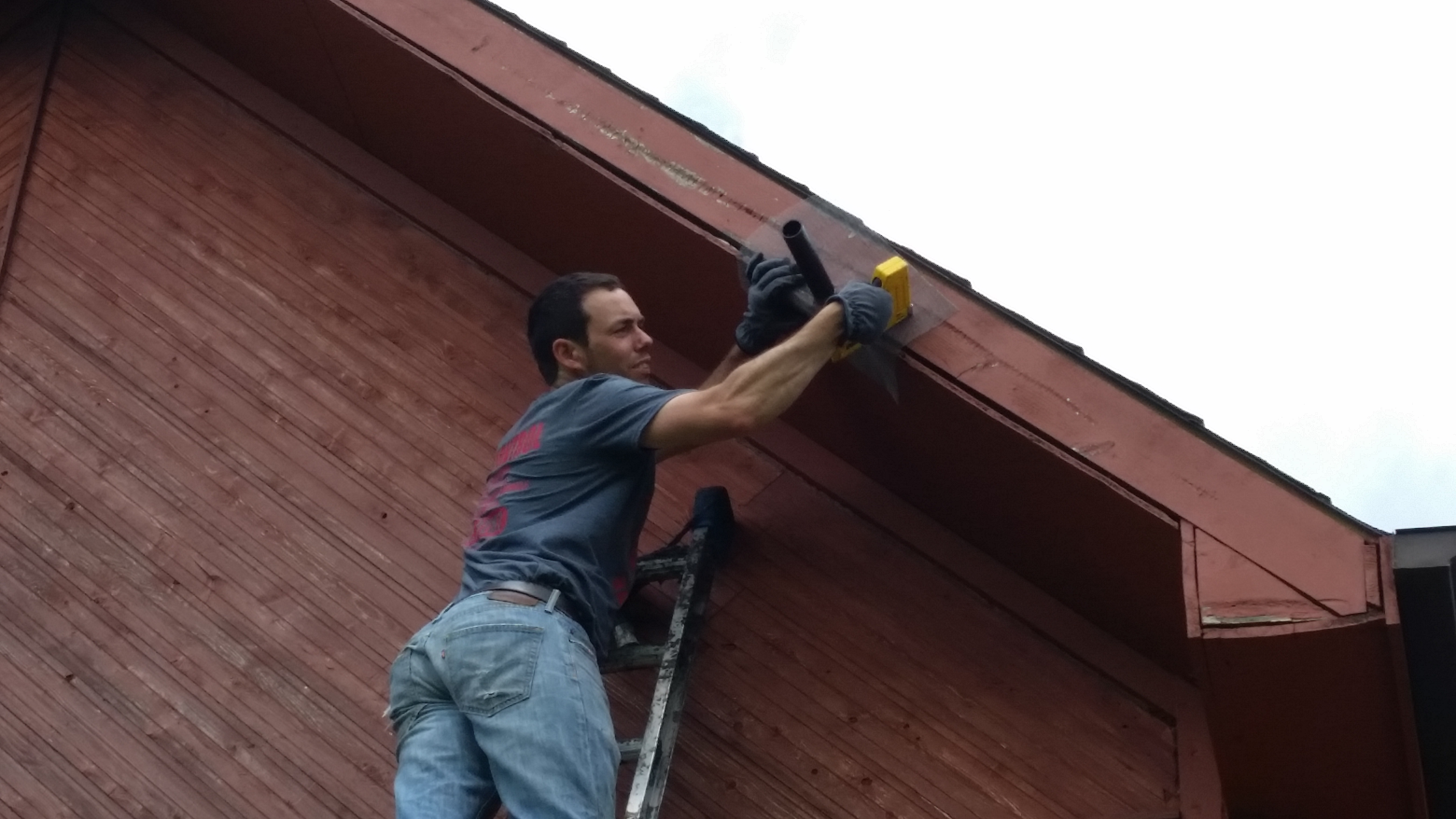 bat removal on a log cabin