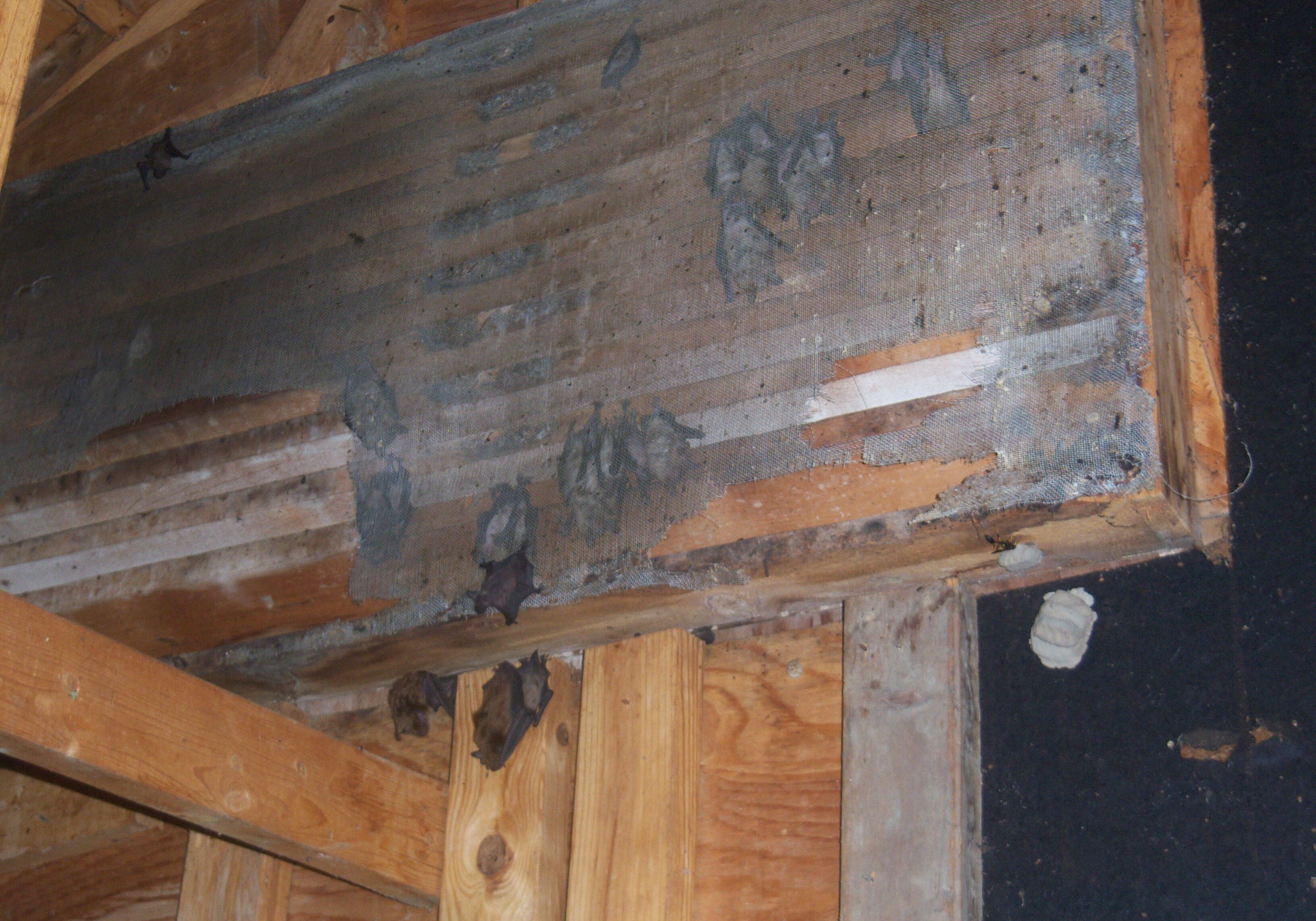 bats in the vent