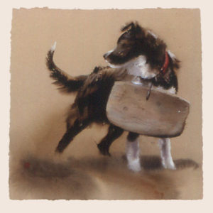 Board or Collie