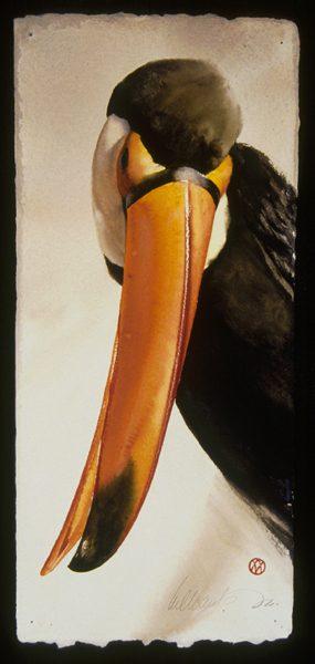 Toucan Salute