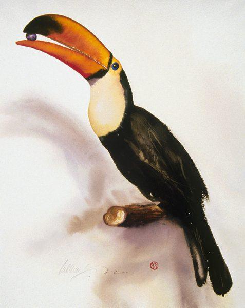 Toucan Swallow