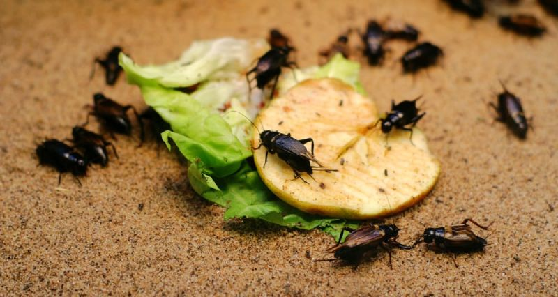 smaller pests insects