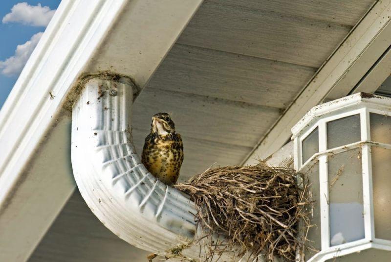 spring nesting