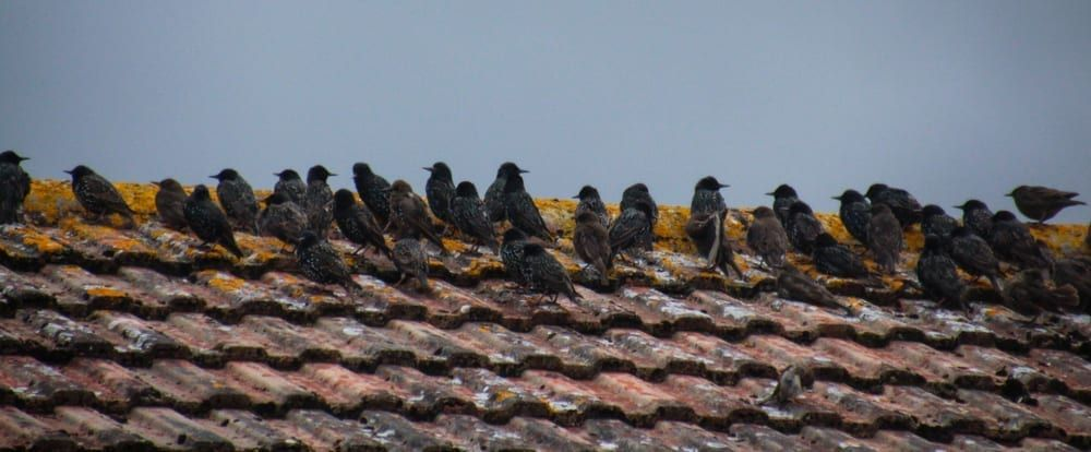 diseases parasites spread birds