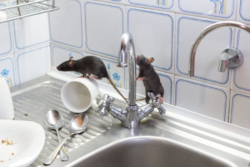 mice rodents
