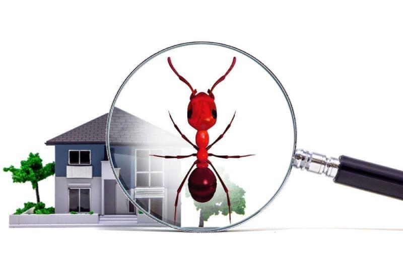 homebuyer Pest Prevention