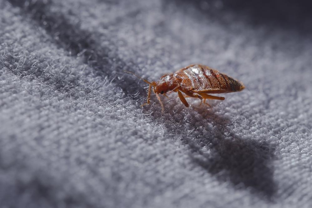 risks ignoring bed bug infestation