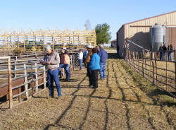 Looking at the Silver Spur Bulls