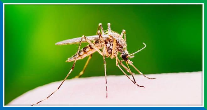 Profilaxis para malaria en la Amazonía e Iquitos