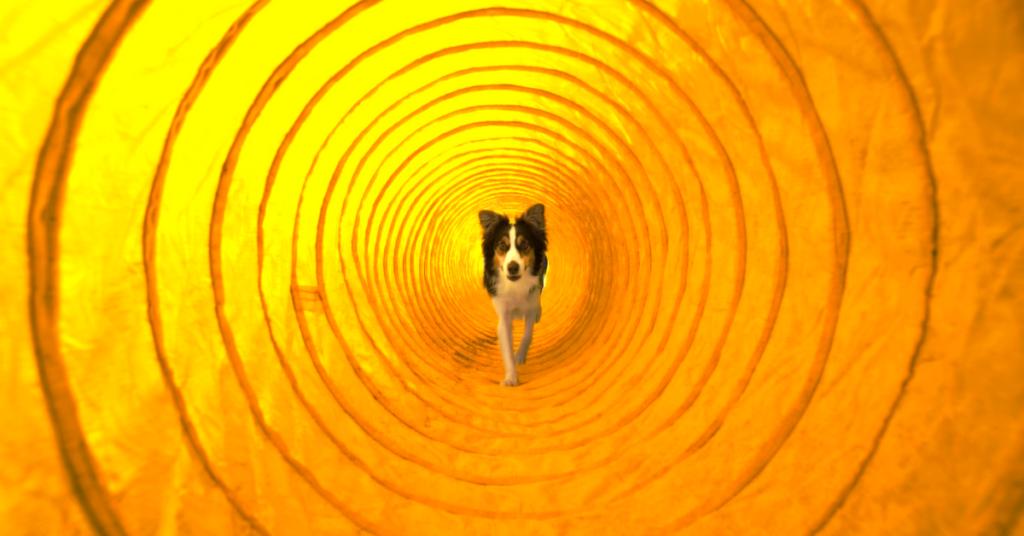 Houston Dog Gym Tunnel