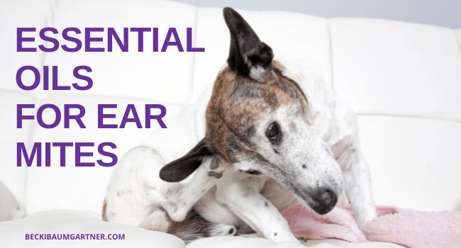 Essential Oils for Ear Mites