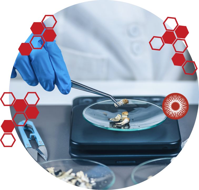 Mycologistics About Research