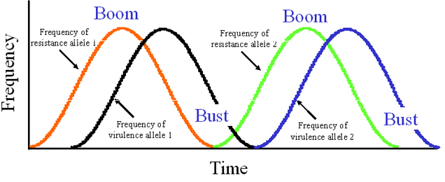 Graphic showing boom and bust cycles over time.