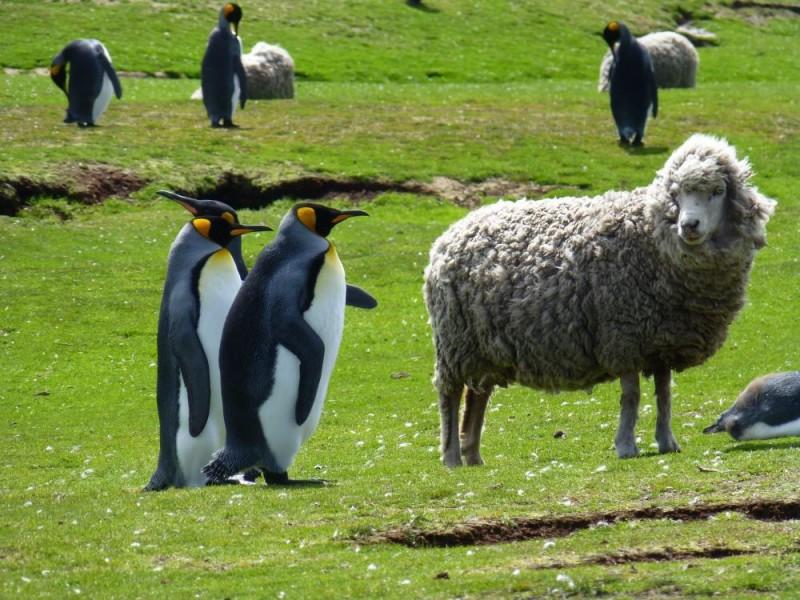 Falkland Islands ... Photo adventure-life.com