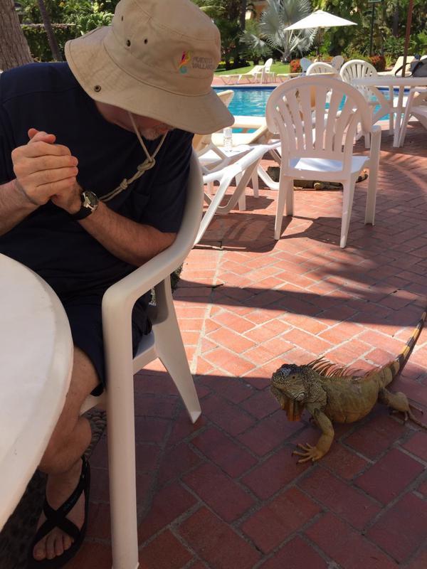 Velas Vallarta Resort in Puerto Vallarta - The visit of the Iguana
