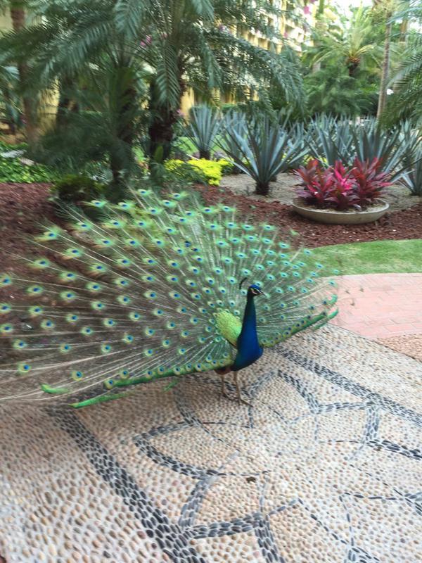 Velas Vallarta Resort in Puerto Vallarta - Daily morning welcome