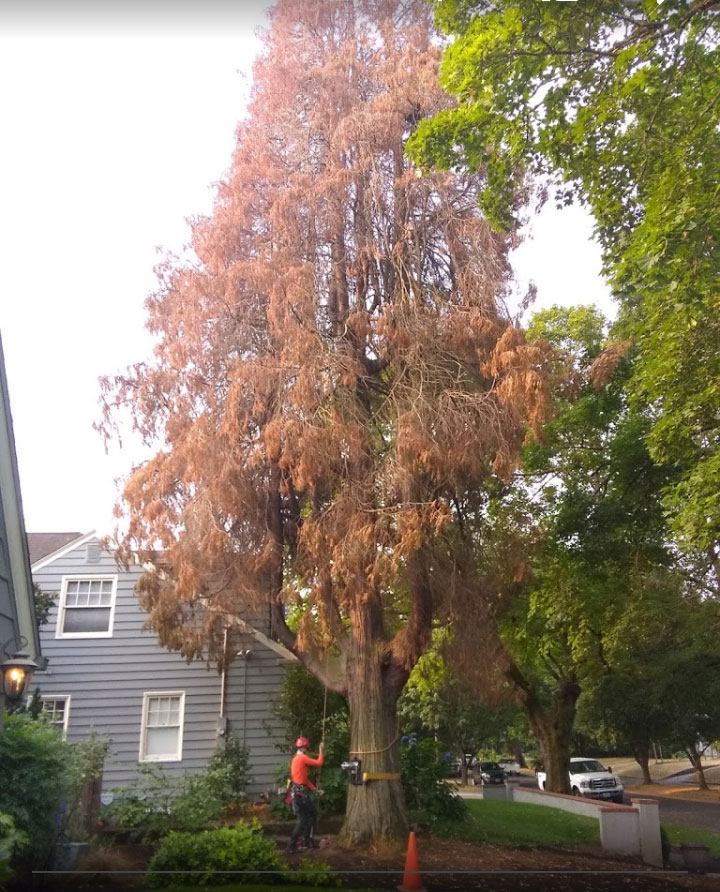 Local Residential Tree Services 1